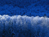 blue winter scene