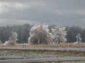 very icy trees